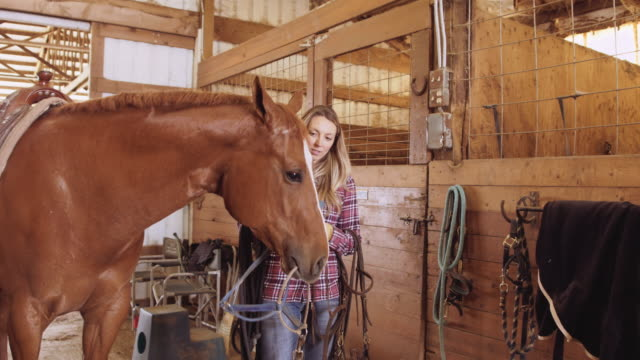young woman adjusting halter for horse - saddle stock videos & royalty-free footage