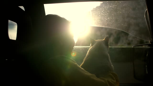 young woman and cat in car. - pet owner stock videos & royalty-free footage