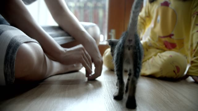 young woman and daugther playing with cat at home - tail stock videos & royalty-free footage