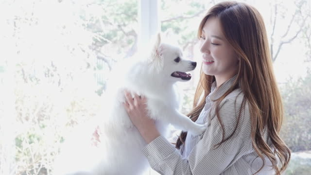a young woman and her dog in living room - korea stock videos & royalty-free footage