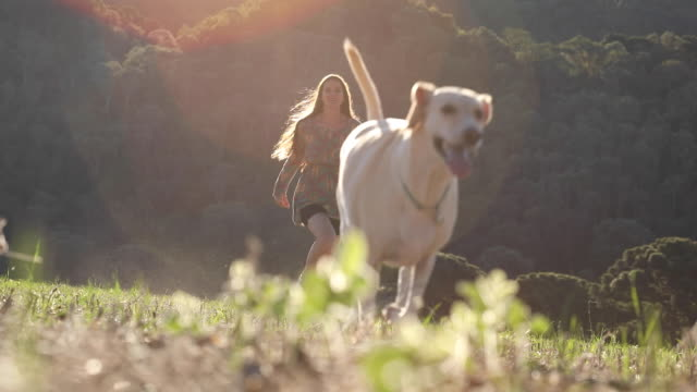 young woman and her dog running on nature - canine stock videos & royalty-free footage