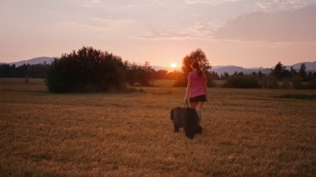 SLO MO Young woman and her dog walking across sunset meadow