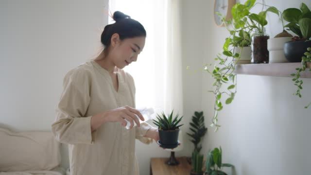 stockvideo's en b-roll-footage met jonge vrouw die de installatie van de cactuspot schikt - kamerplant