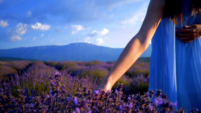 young woman at a lavender field - meadow stock videos & royalty-free footage