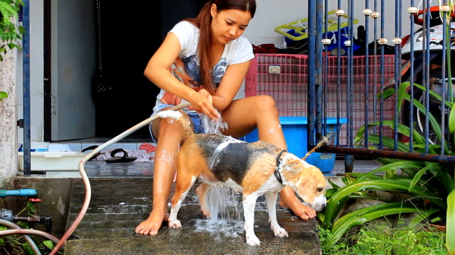 Young woman Bathing Family Beagle