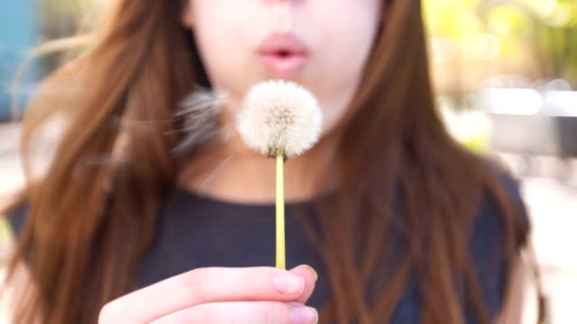 young woman blowing dandelion - fragility stock videos & royalty-free footage
