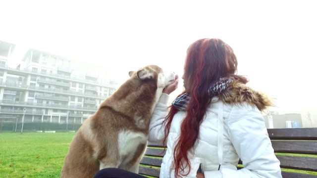young woman caresses her dog - pjphoto69 stock videos & royalty-free footage