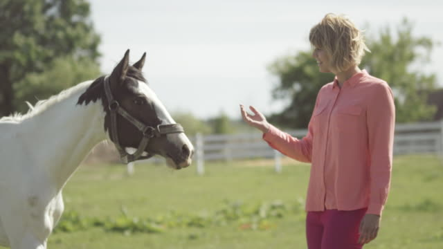 young woman caressing a horse - mittellanges haar stock-videos und b-roll-filmmaterial
