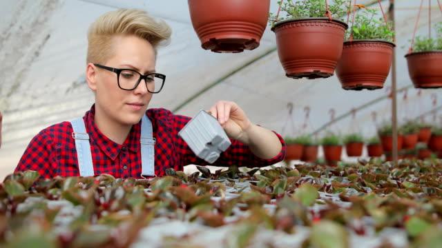若い女性の温室で花の世話。趣味と楽しみ - 園芸学点の映像素材/bロール