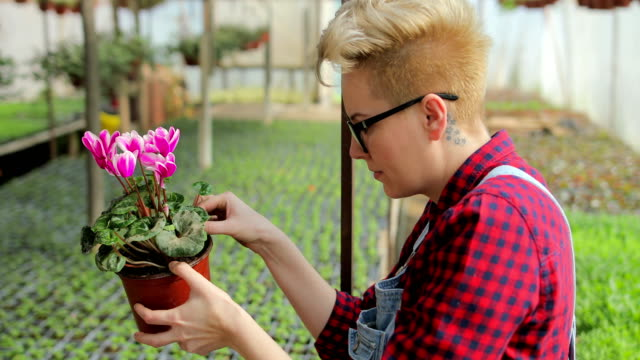 young woman caring for flowers in the greenhouse.hobby work and enjoyment - gardening stock videos & royalty-free footage