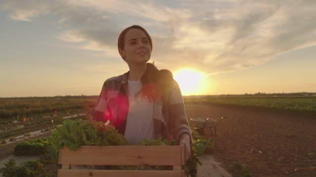 slo mo young woman carries a crate full of vegetables across a field at sunset - agricultural activity stock videos & royalty-free footage