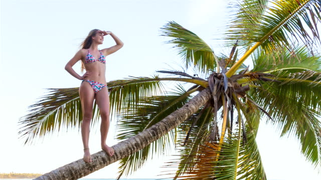 ms young woman climbing palm tree to look out over tropical beach - tropical tree stock videos & royalty-free footage