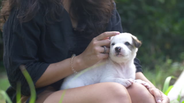 young woman cuddling playful cute dog in nature - puppy stock videos & royalty-free footage