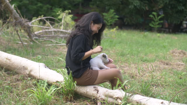 young woman cuddling playful cute dog in nature - stroking stock videos & royalty-free footage