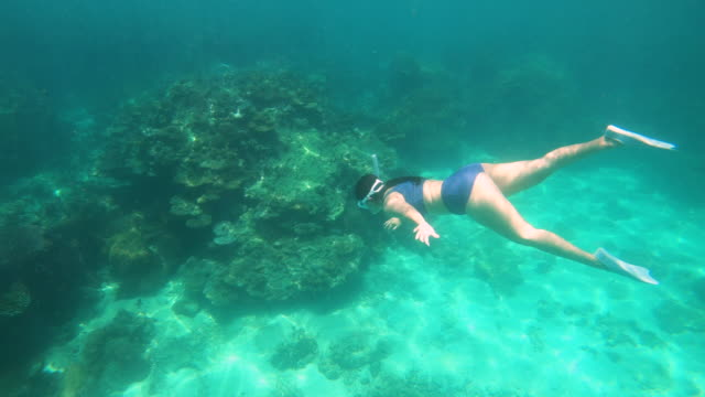 young woman diving around coral reef - free diving stock videos & royalty-free footage