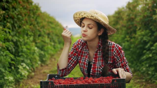 vídeos y material grabado en eventos de stock de la joven come frambuesas frescas y rojas en el jardín al atardecer. cosecha - saborear