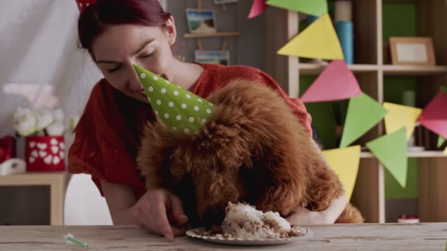 young woman embracing her dog while he is enjoying his delicious doggy birthday cake - party hat stock videos & royalty-free footage