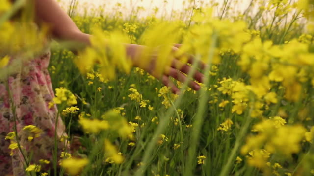 young woman enjoying in the mustard field, haryana, india - mustard stock videos and b-roll footage