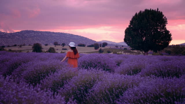 young woman enjoying lavender field at sunset - provence alpes cote d'azur stock videos & royalty-free footage