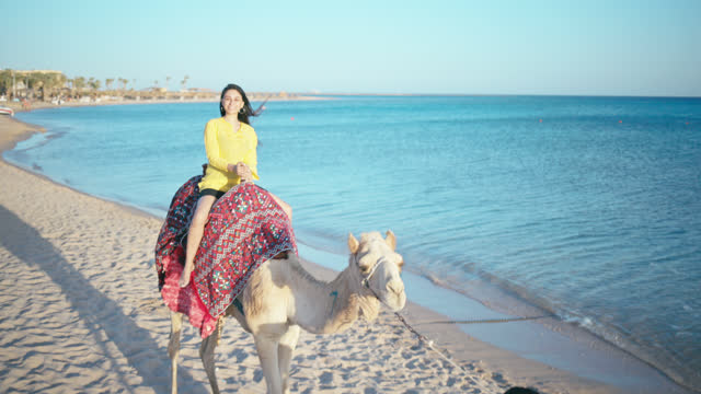 young woman enjoys camel riding on red sea coast. - red sea video stock e b–roll