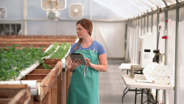 WS Young woman examining vegetables in hydroponic farm.