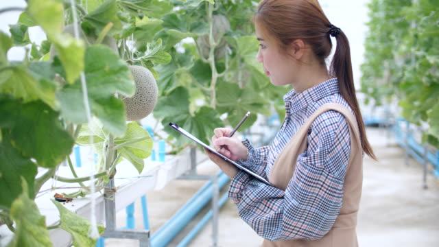 vídeos de stock e filmes b-roll de young woman farmer writing checklist in smart melon farm, organic hydroponic melon farm - melão de casca de carvalho