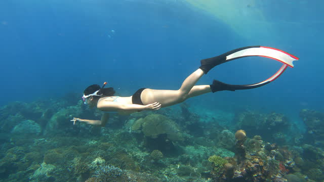 4k young woman free diver wear bikini and long fins diving in crystal clear water coral reef in the sea ocean - free diving stock videos & royalty-free footage