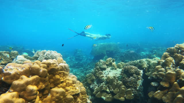 4k young woman free diver wear long fins dive in crystal clear water behind beautiful coral reef and fish in sea ocean - diving flipper stock videos & royalty-free footage