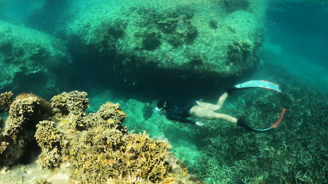 4k young woman free diver wear long fins freediving in crystal clear water coral reef in the sea ocean - aquatic organism stock videos & royalty-free footage