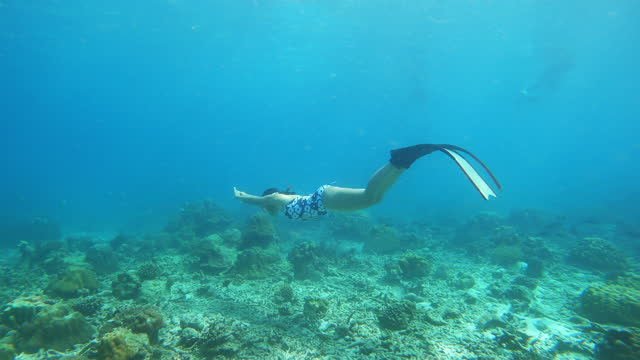 4k young woman free diver wear long fins with dolphin kick style diving in crystal clear water coral reef in the sea ocean - underwater diving stock videos & royalty-free footage