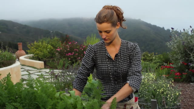 ms slo mo young woman gardening and picking beetroot in organic garden / big sur, california, usa - beet stock videos & royalty-free footage