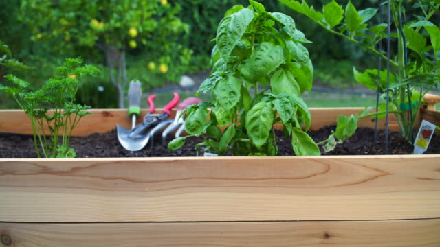 young woman gardening at raised planter box - vegetable garden stock videos & royalty-free footage