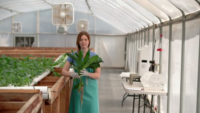 WS Young woman growing vegetables in a greenhouse