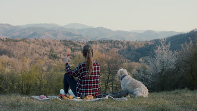 young woman having picnic with dog in nature - ungestellt stock-videos und b-roll-filmmaterial