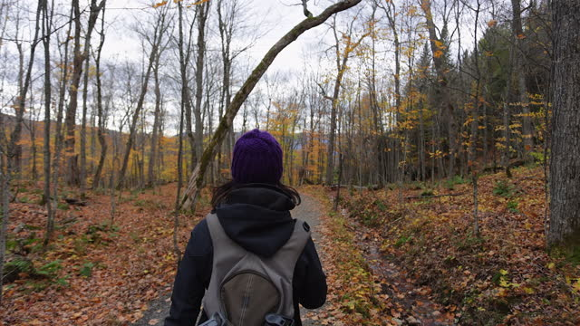 young woman hiking in forest in autumn, mont tremblant provincial park, quebec, canada - autumn stock videos & royalty-free footage