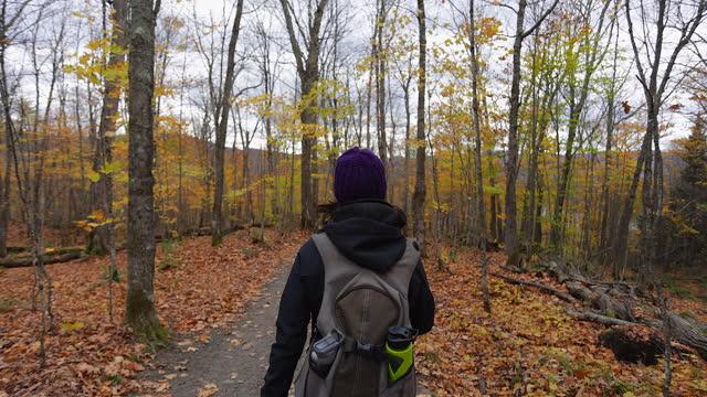 stockvideo's en b-roll-footage met jonge vrouw die in bos in de herfst, mont tremblant provinciaal park, quebec, canada wandelt - hoofddeksel