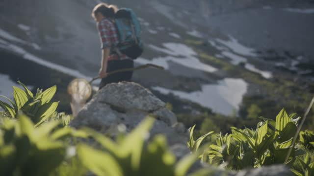 young woman hiking in the mountains with an insect net - endast unga kvinnor bildbanksvideor och videomaterial från bakom kulisserna