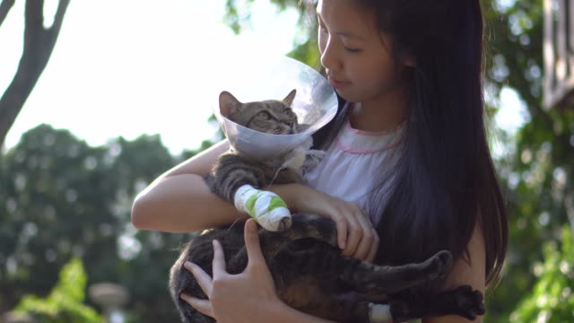 young woman holding and make eye contact with injured tabby cat - injured stock videos & royalty-free footage