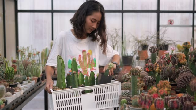 young woman holding crate in hand selecting the succulent potted plant - cactus video stock e b–roll