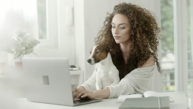 young woman holding dog and working at office - curly hair stock videos & royalty-free footage