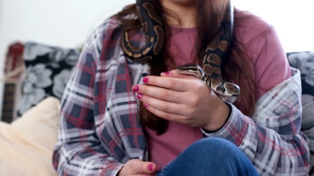 young woman holding snake - pets stock videos & royalty-free footage
