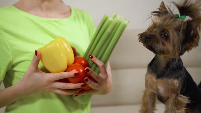 young woman holding vegetables in sign of healthy diet sitting with her dog - celery stock videos & royalty-free footage