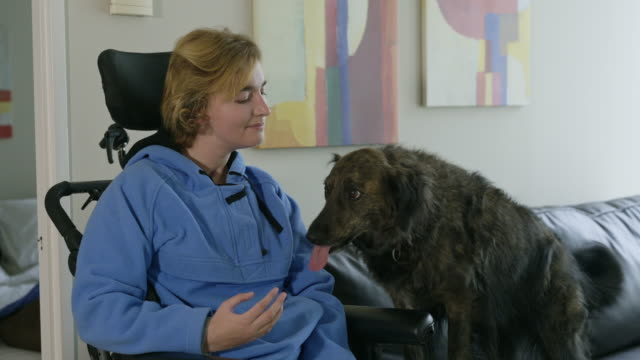 vídeos de stock, filmes e b-roll de young woman in apartment living room with dog licking her face, woman is in a wheelchair. - animal behavior