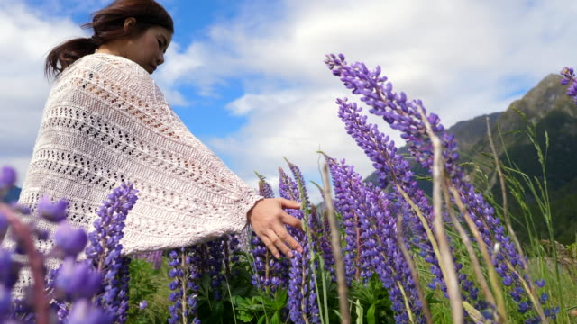 young woman in flower lupine field - only young women stock videos & royalty-free footage