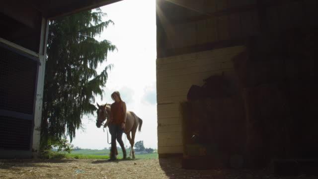 30代の若い女性は、馬の農場で晴れた日に暗い納屋に彼女の茶色の馬を導きます - 農家の納屋点の映像素材/bロール
