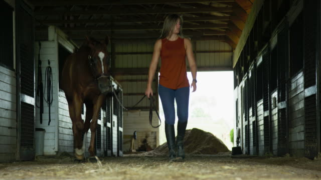 a young woman in her thirties leads her brown horse out of a barn at a horse farm - barn stock videos & royalty-free footage