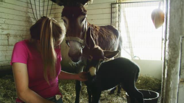 20代の若い女性が納屋で母親の隣にロバの赤ちゃんを愛情を込めてペット - アジア野ロバ点の映像素材/bロール