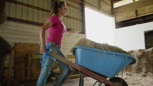 a young woman in her twenties picks up a hay bale from a haystack and puts it in a wheelbarrow in a barn on a farm - new england usa stock videos & royalty-free footage