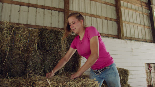 a young woman in her twenties picks up a hay bale from a haystack and puts it in a wheelbarrow in a barn on a farm - bale stock videos & royalty-free footage