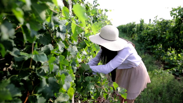 young woman in the vineyard - mystery stock videos & royalty-free footage